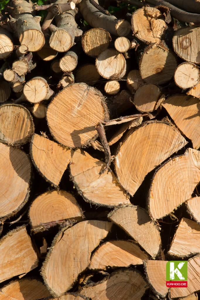 Holz: ein natürlicher Baustoff, der es »in sich« hat