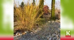 Steingarten anlegen leicht gemacht – Ideen, Tipps und Tricks
